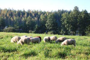 lammas10-pieni
