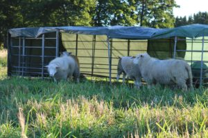 lammas4-pieni