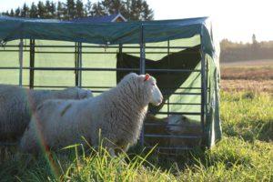 lammas5-pieni