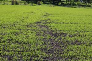 Syksyisen muokkausharjoitusten jälkeen pelto jäi hienojakoiseksi. Eroosion aiheuttamat jäljet ovat havaittavissa vielä 30.5